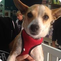 Adopt A Pet :: Zara - Thousand Oaks, CA