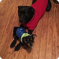 Adopt A Pet :: Tyke - Acworth, GA