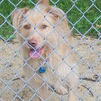 Adopt A Pet :: King - Portage, WI