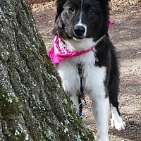 Adopt A Pet :: Tori - Charlotte, NC