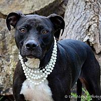 Adopt A Pet :: Alice - Garden City, MI