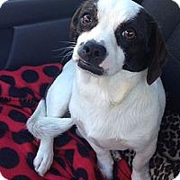 Adopt A Pet :: Brooke - Encinitas, CA