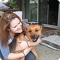 Adopt A Pet :: McKinnley - Santa Barbara, CA