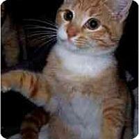 Adopt A Pet :: Scarlet - Spencer, NY