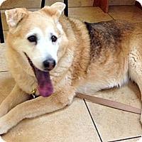 Adopt A Pet :: Cassie - Scottsdale, AZ