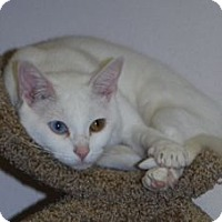Adopt A Pet :: Pearl - Colorado Springs, CO