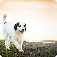 Adopt A Pet :: CHUBBY - Coudersport, PA