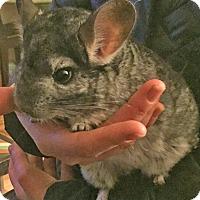 Adopt A Pet :: Pepper - Granby, CT