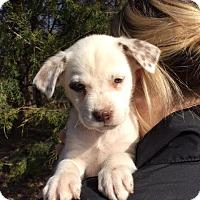 Adopt A Pet :: Cranberry - his little face!! - Chicago, IL