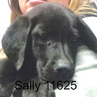 Adopt A Pet :: Sally - Greencastle, NC