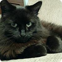 Adopt A Pet :: Taylor - Westland, MI