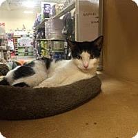 Adopt A Pet :: Noodles - Albany, NY