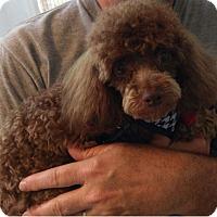 Adopt A Pet :: Armani - Hampton, VA
