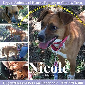 Australian Cattle Dog/Shepherd (Unknown Type) Mix Dog for adoption in Hearne, Texas - Nicole