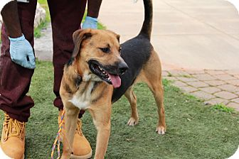 Hound (Unknown Type) Mix Dog for adoption in Greensboro, North Carolina - Trooper