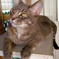 Adopt A Pet :: Barry - Boonville, MO