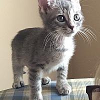 Adopt A Pet :: Chestnut - Duluth, GA