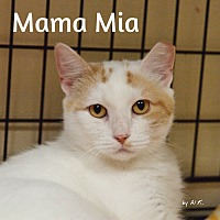 Adopt A Pet :: MamaMia - Ocean City, NJ