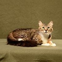 Adopt A Pet :: Ellie - Cary, NC