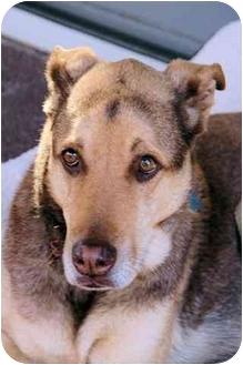Shepherd (Unknown Type) Mix Dog for adoption in Marietta, Georgia - COCO