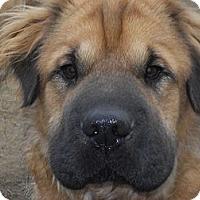 Adopt A Pet :: Meatloaf - Newport, VT