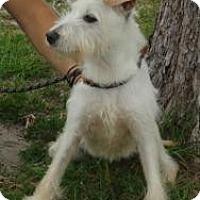 Adopt A Pet :: Beacon - Crawfordville, FL