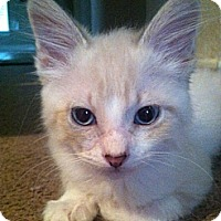 Adopt A Pet :: Lucky - The Colony, TX