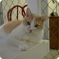 Adopt A Pet :: Forest - East Smithfield, PA