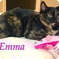 Adopt A Pet :: Emma - Foothill Ranch, CA