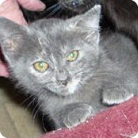 Adopt A Pet :: Blueberries N Cream - Dallas, TX
