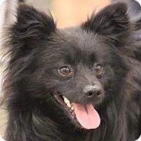 Adopt A Pet :: Tumble - Minneapolis, MN