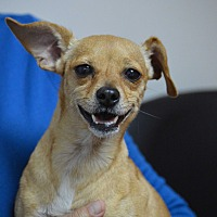 Adopt A Pet :: Chloe - Cranston, RI