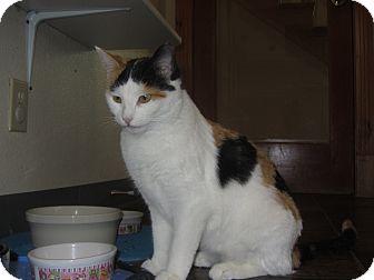 Calico Cat for adoption in Ridgway, Colorado - Emoji