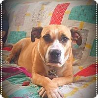 Adopt A Pet :: Pita - Sharon Center, OH