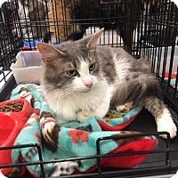 Adopt A Pet :: Harley - Harrisburg, NC