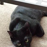 Adopt A Pet :: Stanley - Brantford, ON
