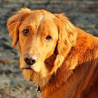 Adopt A Pet :: Monty - Minnetonka, MN