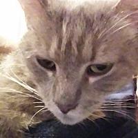 Adopt A Pet :: Gandolf - North Highlands, CA