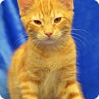 Adopt A Pet :: Owen     170977 - Atlanta, GA