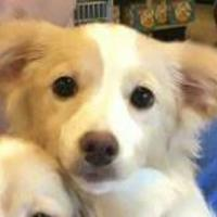 Adopt A Pet :: Thelma - Las Cruces, NM