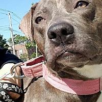 Adopt A Pet :: Rosa - Bronx, NY