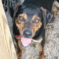 Adopt A Pet :: Garfunkel - Norfolk, VA