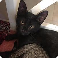 Adopt A Pet :: Sammy - Duluth, GA