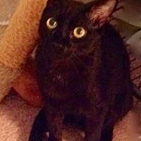 Adopt A Pet :: Yukon (SM) 11.15.16 - Orlando, FL