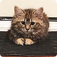 Adopt A Pet :: Peaches - N. Billerica, MA