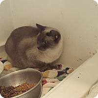 Adopt A Pet :: Farrah - Fowlerville, MI