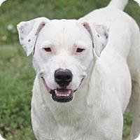 Adopt A Pet :: Everly - Mahwah, NJ