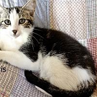 Adopt A Pet :: Norris - Polson, MT