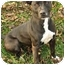 Photo 2 - American Staffordshire Terrier Dog for adoption in Chicago, Illinois - Katie