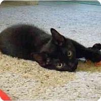 Adopt A Pet :: Molly Moon - Modesto, CA